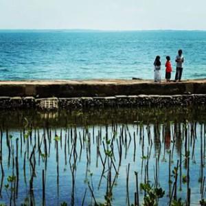 magrove pulau seribu
