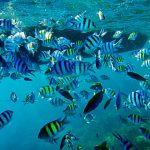 snorkeling pulau pramuka